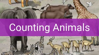 Preview for Counting Animals