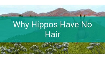 Preview for Why Hippos Have No Hair
